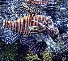 Leo the Lion Fish by vigor