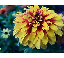 The Dirty Zinnia Photographic Print