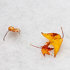 Nature is painting on white canvas by Yelena Rozov
