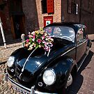 Wedding Beetle by Martin Pot