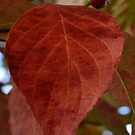 Autumn Dogwood-009 by WhiteOaksArt