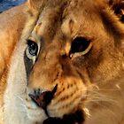 iPhone Case - Lion II by Eileen Brymer