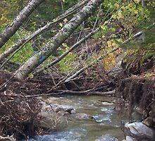 Trails of Irene by Murph2010