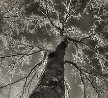 After The Snow 2 by dlwagner