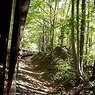 Smoky Mountain Train Ride by Laurie Perry