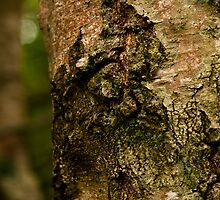 Greeny Red Bark by Wealie