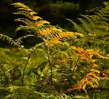 Greeny Yellow Fern by Wealie