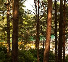View of the Blue Pool Through the Trees by Wealie