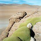 Desert Moss - Atacama Desert, Bolivia by joegardner