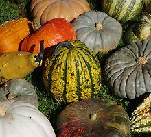 Pumpkin patch 2 by purplefoxphoto