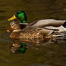 Mr. & Mrs. Mallard by Jeff Weymier