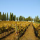 Vineyard in Chianti by maumar70