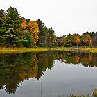 Fall Foliage  by Sergey Kalashnik