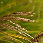 Fall Wheat Harvest by Sergey Kalashnik
