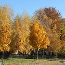 Golden October by karina5