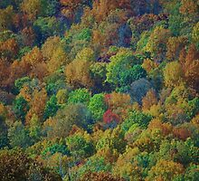 nature's palette by ANNABEL   S. ALENTON