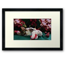 Christmas Maine Coon Kitty Cat w/ Big Eyes ~ Cute Feline Kitten w/ Paws Stretched Waiting for Santa Claus on Xmas Eve Framed Print