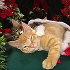 Cheshire Cat Grin ~ Cute Kittens in Love ~ Christmas Kitties in a Santa Hat Lying Down w/ Paws Stretched Out by Chantal PhotoPix
