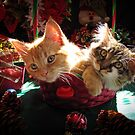 Christmas Basket of Two Kittens in Love ~ Portraits of Kitty Cats in Xmas Scenery w/ Pine Cones, Red Baubles &amp; Poinsettias by Chantal PhotoPix