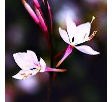 Colour Of Life XVII Photographic Print