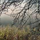 Mist In The Branches At Heber Down by Gary Chapple