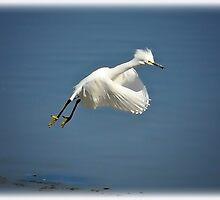 I'm Flying  by Saija  Lehtonen
