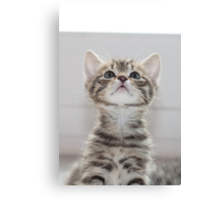 Can I have some more? Canvas Print
