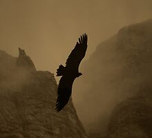 On Dark Wings by Graham Povey