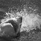 Jaws by Anna Phillips