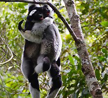 Indri Couple by Justharry