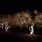 Westonbirt Arboretum Night by Karl Thompson