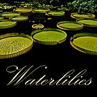 Waterlilies by cclaude