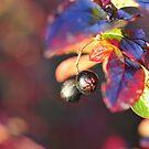 Autumn in my garden by julie08