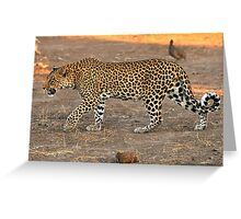 Stalking leopard - Mashatu, Botswana Greeting Card