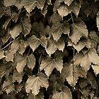 Leaves by Robert Baker
