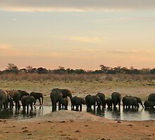 Elephant sundowners - BEST VIEWED LARGE by Lynda Harris