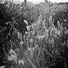 Black & White Grass by Alex Evans