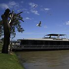 Luxury Houseboat On The Murray River by Noel Elliot