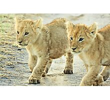 Twin Cubs Photographic Print