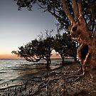 Crab Claw Mangroves. by DaveBassett