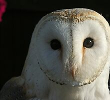 Barn Owl Staring by David Alexander Elder