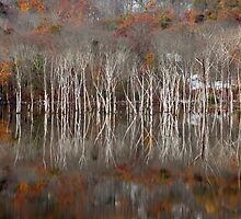 Autumn by Mary Ann Reilly