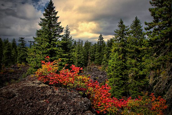 I'll Tag Along by Charles & Patricia   Harkins ~ Picture Oregon