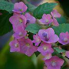 Muted Color Flower Cluster by Sam Matzen