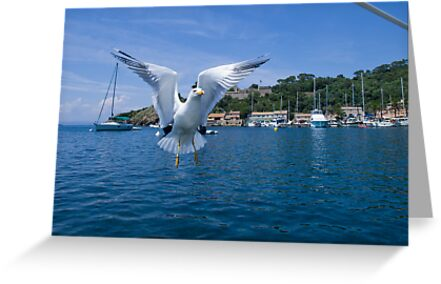 Hungry seagull is still after my lunch by benjy