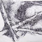 Fallen Trees by Peter Baglia