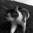 cat by Kat Trow