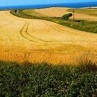 Cornish Fields in Summer by clydeypops