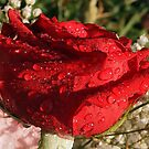 The Wet Rose by Linda Makiej