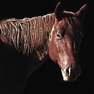 Red Horse by Ginny Luttrell